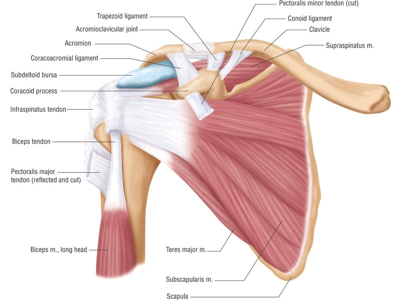 Shoulder Pain And What May Be Causing It Belmont Ca Patch