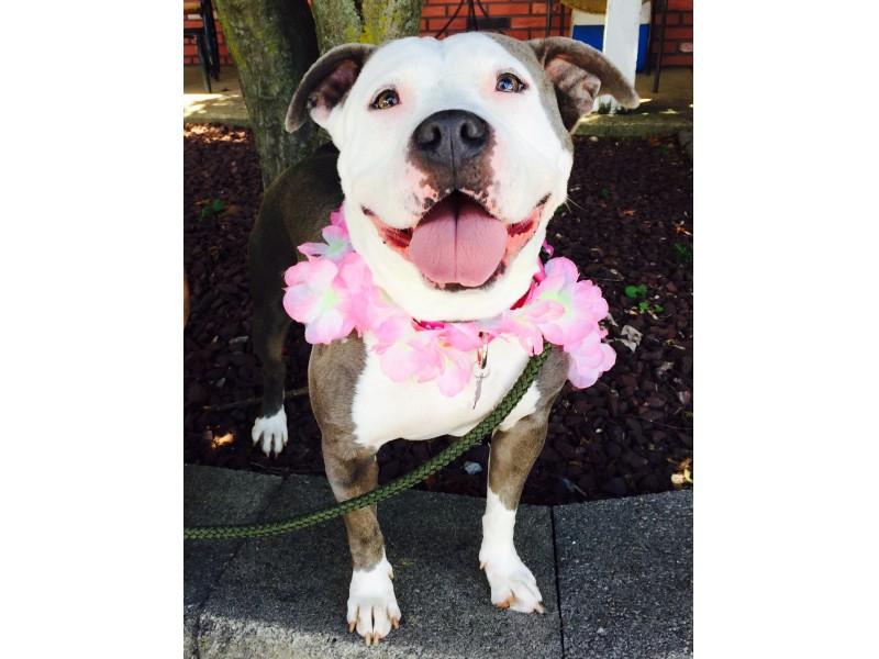 Morristown Nj Dog Rescue