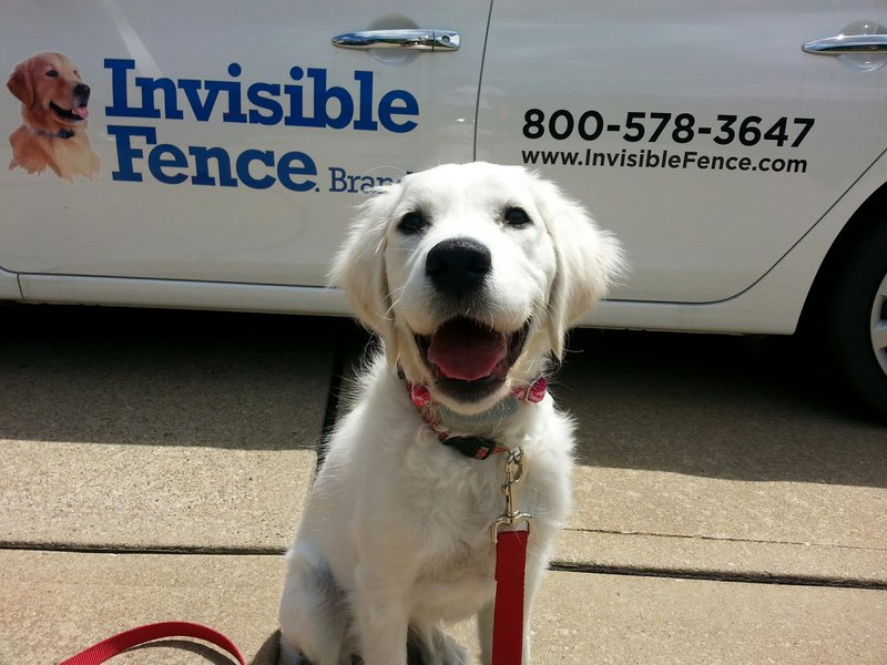 Invisible Fence Celebrates Grand Opening Saturday At The