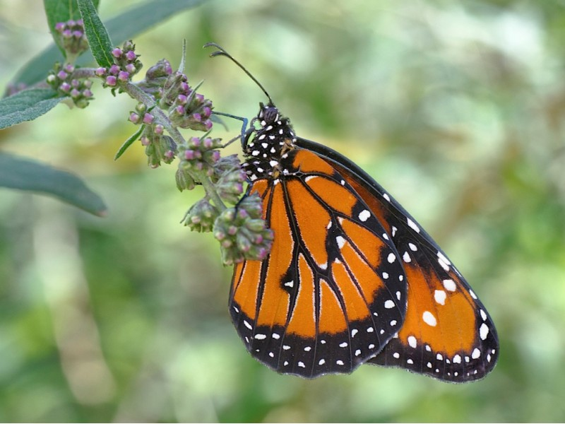 The 39 Butterfly Guy 39 To Appear At Greenwood Gardens In Short Hills Millburn Nj Patch