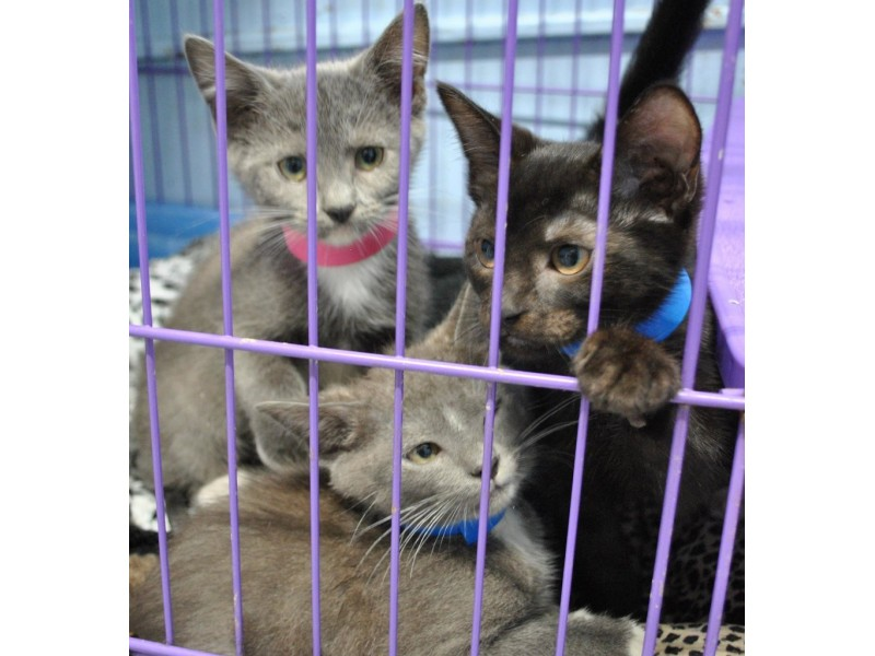 Cats And Kittens For Adoption Bethesda Md Patch