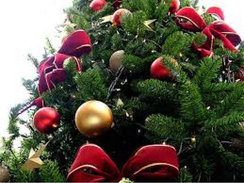 How To Recycle Your Christmas Tree In Roxborough | Roxborough, PA ...