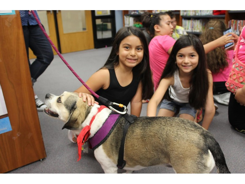 Photo Therapy Dog Visits School Bolingbrook Il Patch