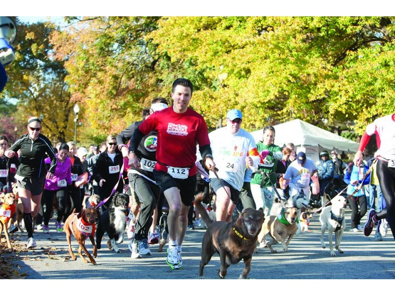 Dog Run Park Dunwoody