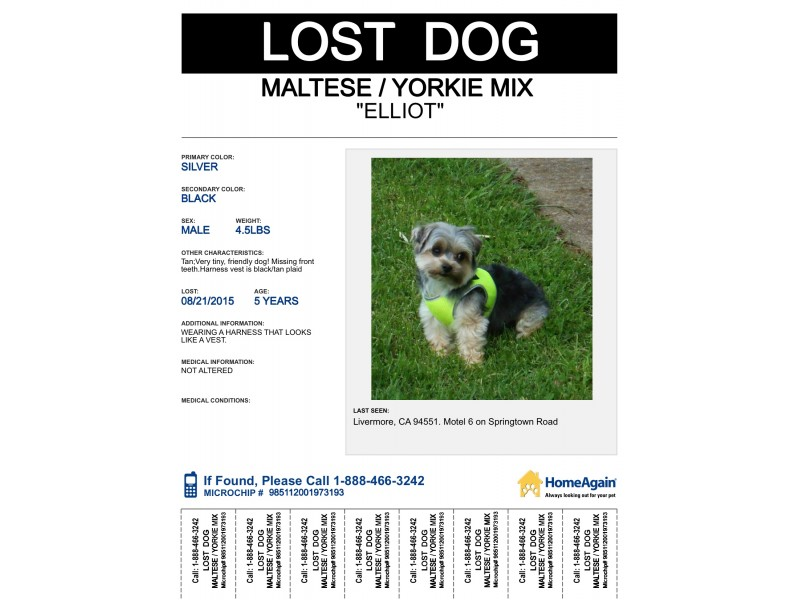Lost Dog Tiny Morkie Maltese Yorkie Livermore Ca Patch