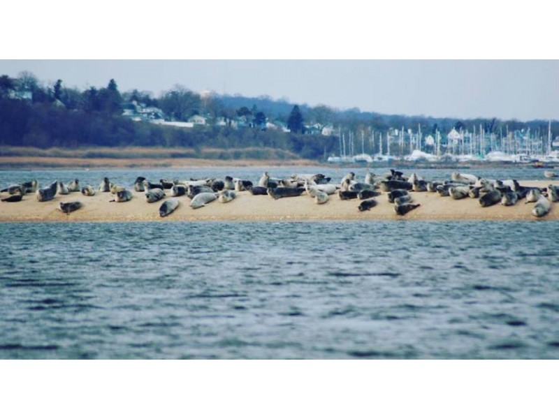 100 Seals Lounge On Sandy Hook Island Middletown Nj Patch