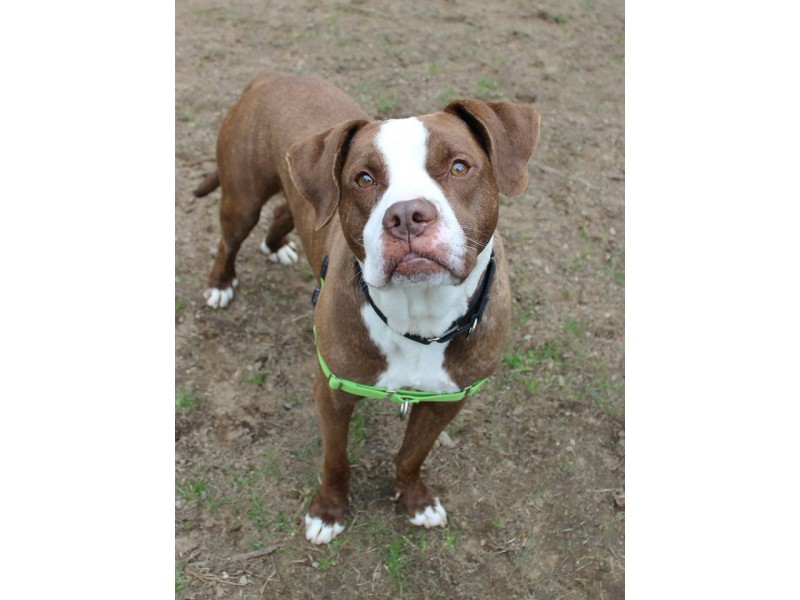 Buddy Dog Sudbury Dogs For Adoption