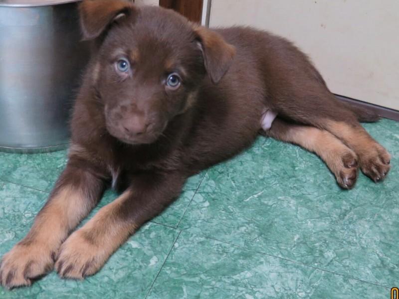 Dog Adoption Shorewood Il