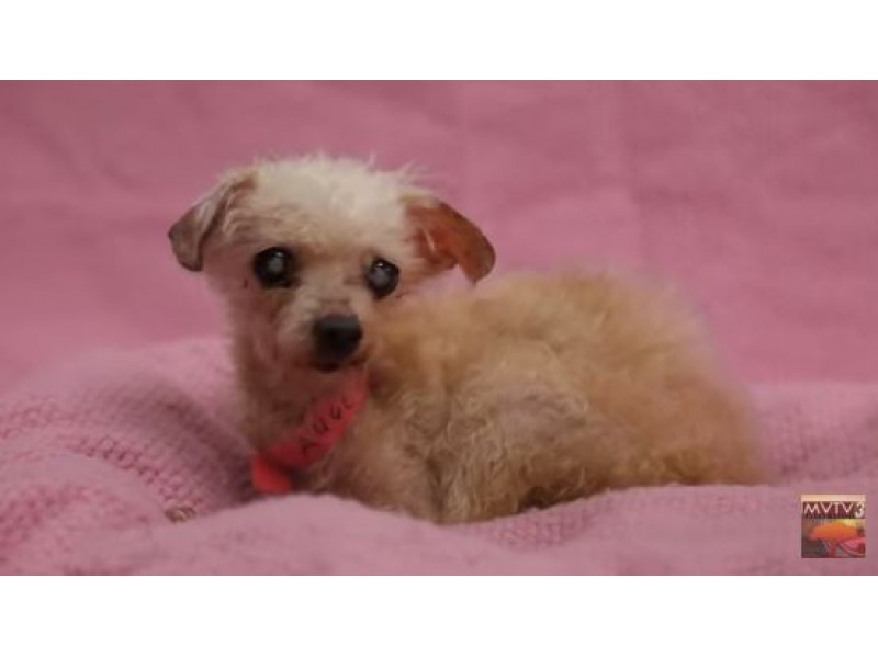 20+ Small Dogs Abandoned At MoVal Animal Shelter Need