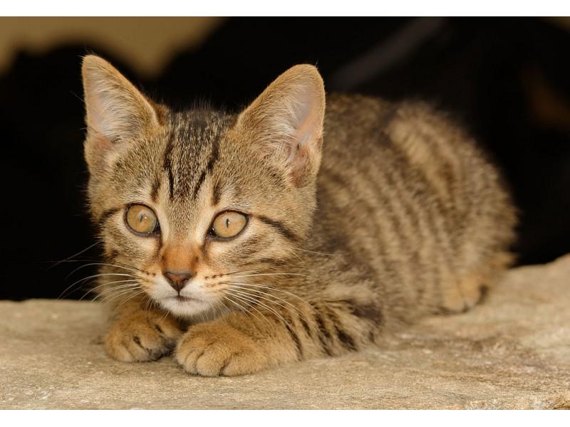 Cat Rescue Wayland