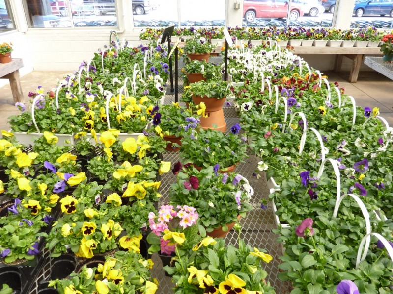Spring Update: Expert Growers Share Latest Gardening Trends, Tips ...