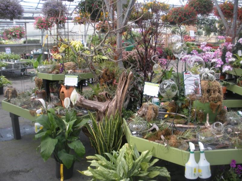Photo Gallery Mahoneys Garden Center Falmouth MA Patch