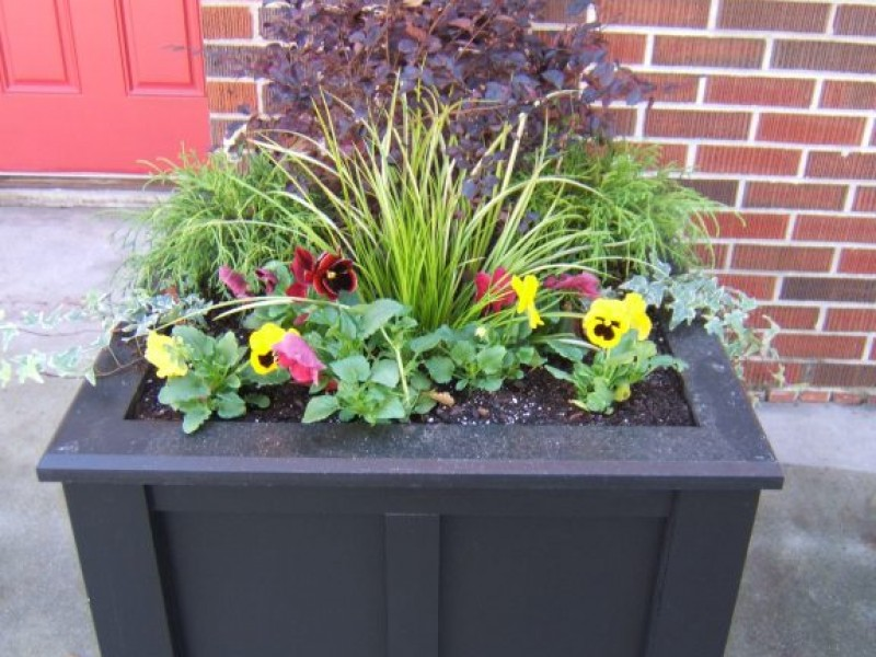 Planting Pansies For Fall And Winter Color Norcross Ga