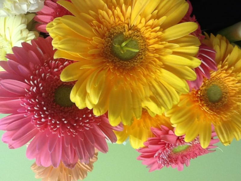 10 most romantic flowers for valentine s day fairfield ct patch