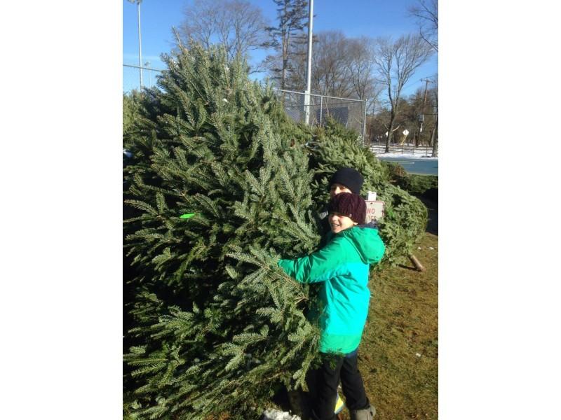 Christmas Trees Lynnfield Ma