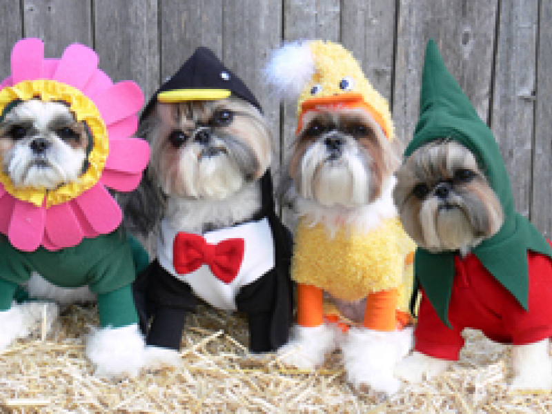 lucky pets dog halloween costume contest