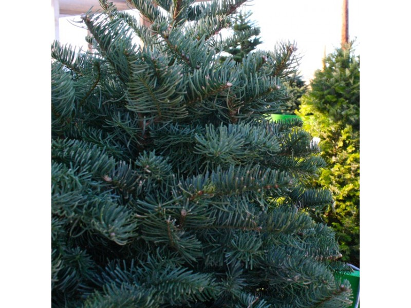 Where To Recycle Your Christmas Tree In Poway