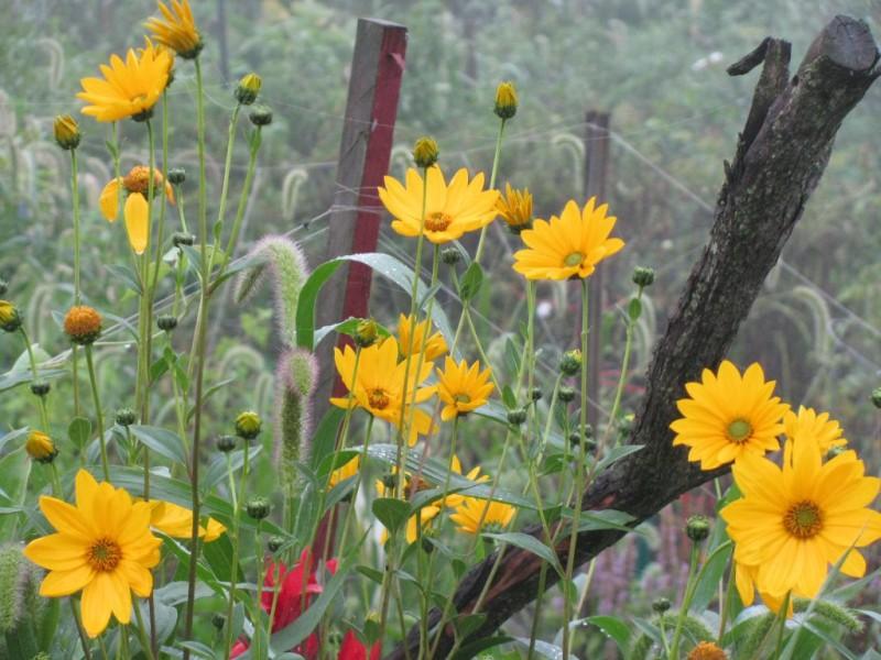 Haddon Township Community Garden | Haddonfield, NJ Patch