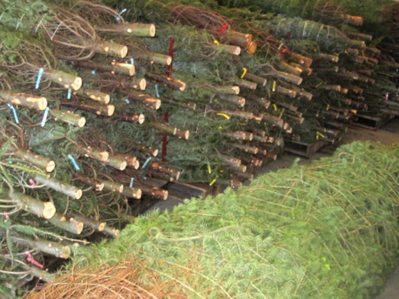 Captivating ... Howard Countyu0027s Christmas Tree Farms  ...