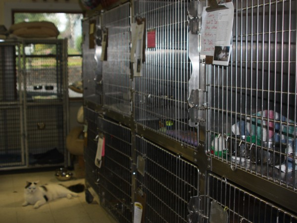 ... Shelter Overrun With Abandoned Pets ...