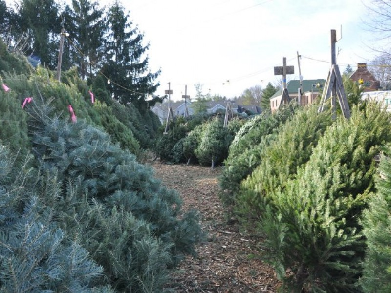 Christmas Tree Recycling In Anne Arundel