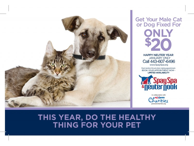 Get Your Dog Or Cat Neutered For 20 Crofton Md Patch