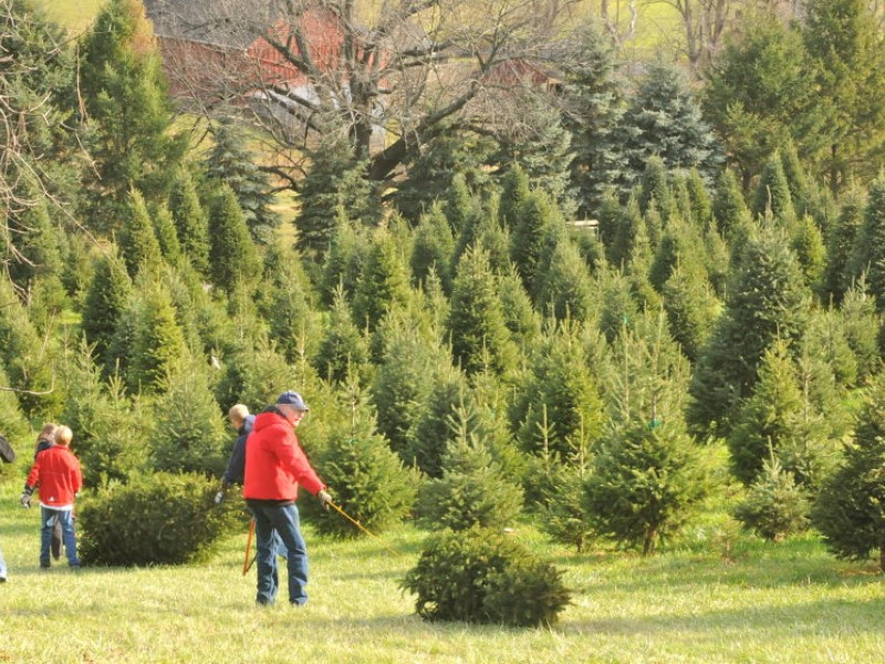Tis The Season To Find The Perfect Christmas Tree