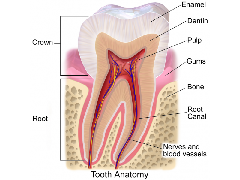 abnormal tooth enamel amelogenesis imperfecta