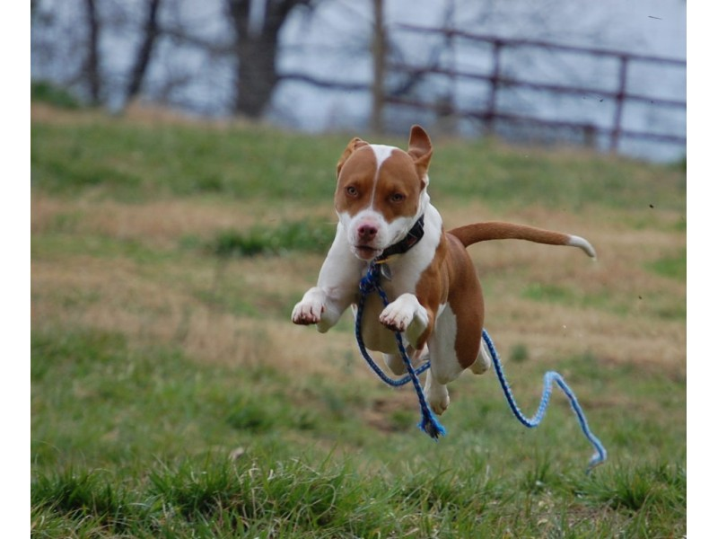 How To Protect Yourself And Your Pet From Aggressive Dogs Other Animals