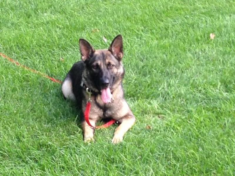 Lifestyle Dog Training Burlington
