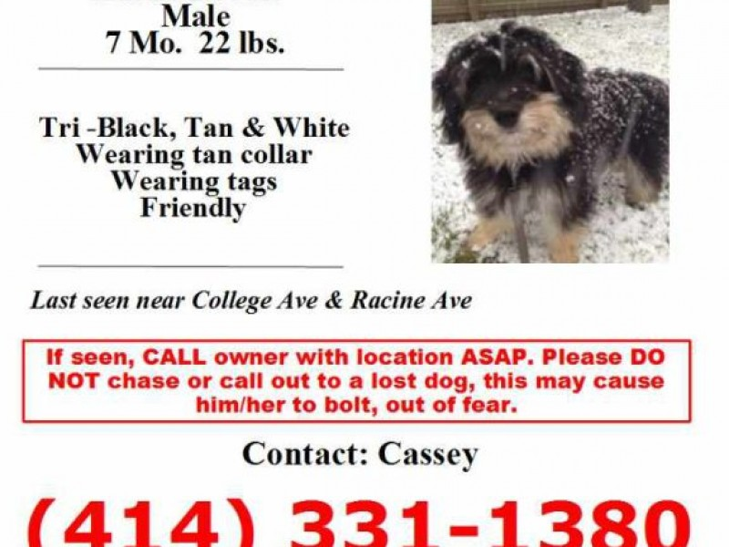 Lost Puppy: Have You Seen This Dog? | Muskego, WI Patch