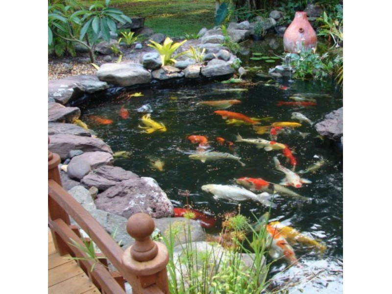 Hurricane prep and first aid for your koi pond bradenton for Koi pond builders near me