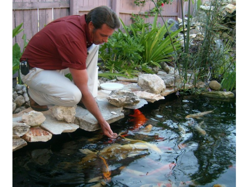 Hurricane prep and first aid for your koi pond bradenton for Fish pond preparation