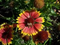 ... Savvy Gardener Workshop To Provide Great Gardening Ideas 1 ...