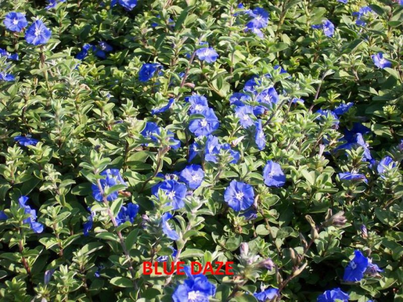 Here Are Some Shady Characters That Will Thrive In Your Florida Garden Without Full Sunlight St Pete Fl Patch