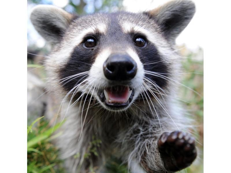Rabies In The Backyard!