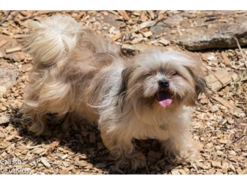 Dogs For Adoption In Suwanee Ga