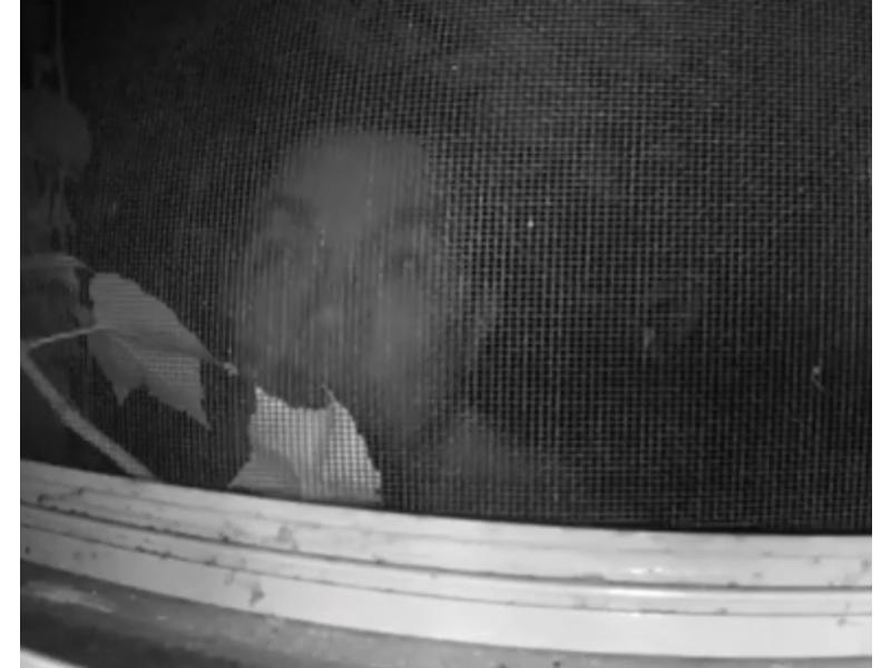 Bilderesultat for creepy man looking in window