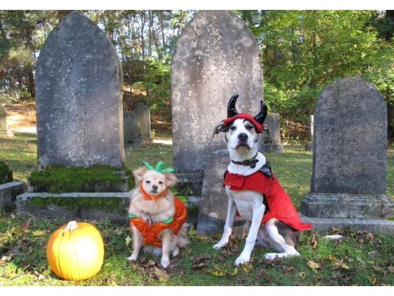 Annual Dog Costume Parade Returns to JP on Saturday & Annual Dog Costume Parade Returns to JP on Saturday | Jamaica Plain ...