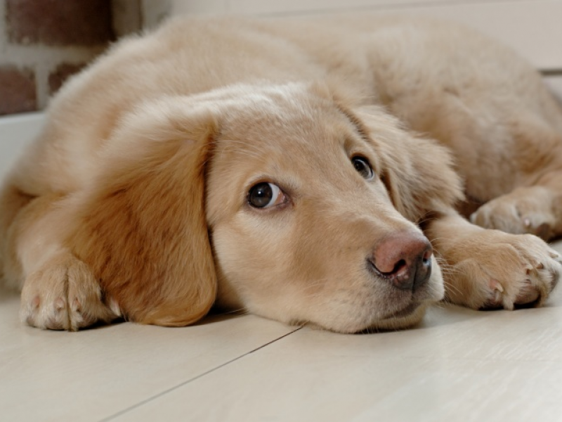 How to Keep Your Dog From Eating Poop: Blog Spotlight