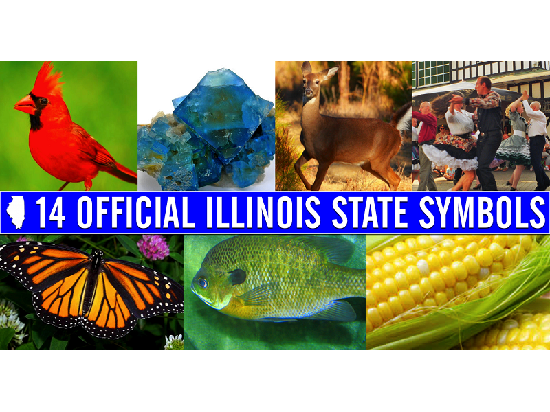 Did You Know These Are The 14 Official State Symbols In Illinois