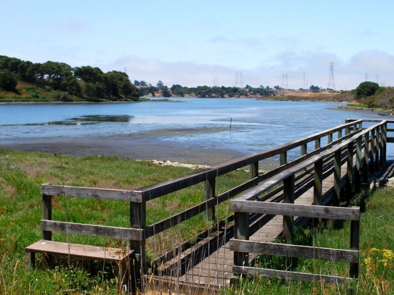 Moss landing sharks cioppino and kayaks capitola ca patch for Phil s fish market moss landing