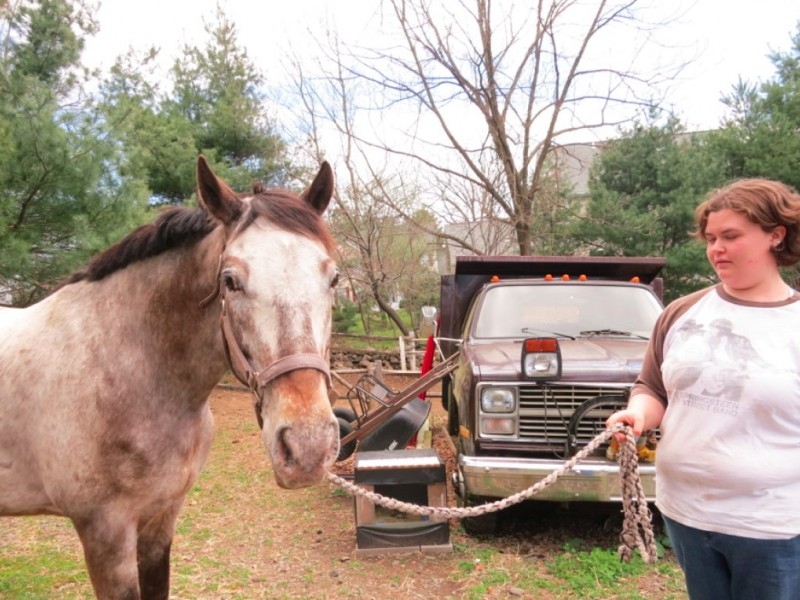 Mark Your Calendars For Wishes For Horses Fundraiser Norwalk Ct