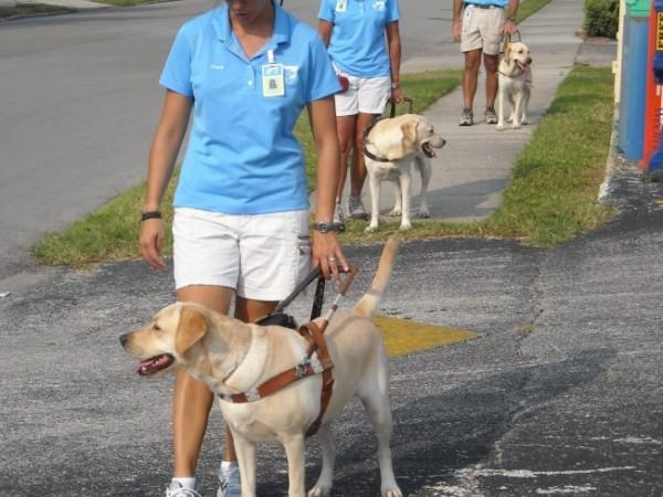 Guide Dog Training Sarasota Fl