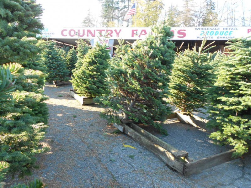 Kirkland Encouraging \'Tree-Cycling\'   Kirkland, WA Patch