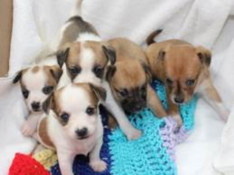 North Shore Animal League Small Dogs