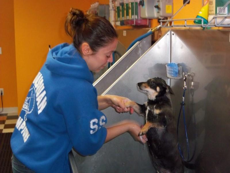 Brielle dog boutique self serve dog wash makes a splash brielle dog boutique self serve dog wash makes a splash solutioingenieria Gallery