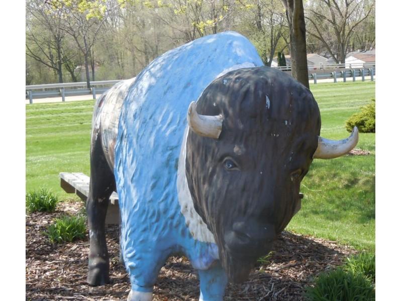hunting for buffalo grove u0026 39 s buffaloes