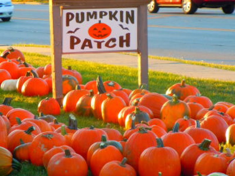 Pumpkin patches, corn mazes, fall festivals in the oswego area.
