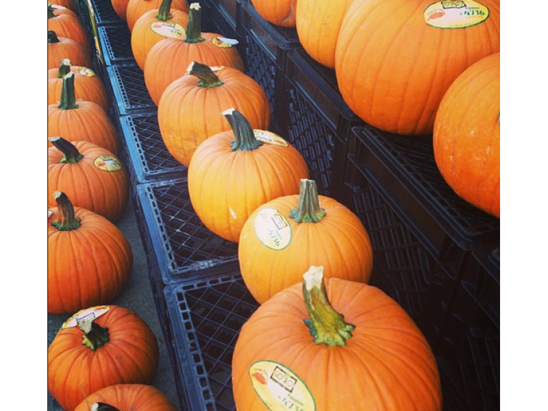 Pumpkin patches, corn mazes, fall festivals in the plainfield area.